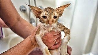 Paralyzed Kitten Finally Walks!!!