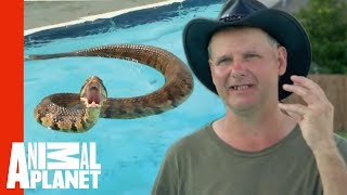 getlinkyoutube.com-Face-to-Face with a Cottonmouth Snake