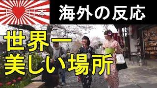 getlinkyoutube.com-【日本大好き】 京都の桜と伝統の共演 『世界で一番美しい!』 【海外の反応】