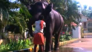 getlinkyoutube.com-crazy harigovind