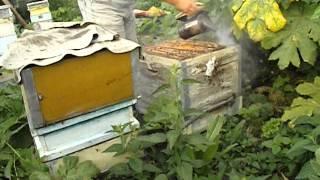 getlinkyoutube.com-зажимаем матку на одном корпусе, для увеличения выхода товарного меда в семье пчел