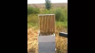 "getlinkyoutube.com-Вадене на мед , Пчеларска ферма ""Бормалийски"""