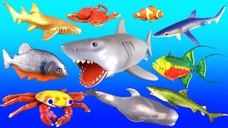 getlinkyoutube.com-Giant Shark Whales & Fish | Kids Surprise Toy Collection | Learn Names & Fun Facts in English
