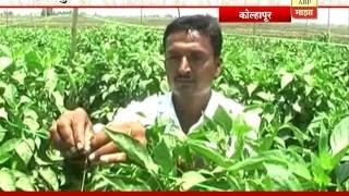 getlinkyoutube.com-712: Kolhapur  Mirchi Cultivation  Success Story of Abhinandan Patil  20:05:2016