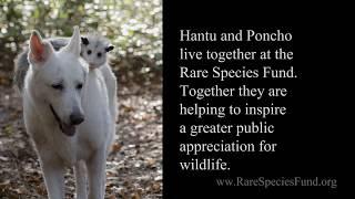 Dog Adopts Baby Opossum - Animal Friendship