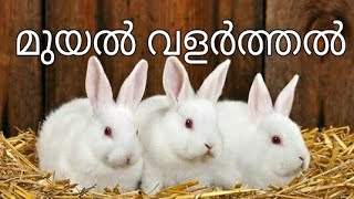 Rabbit Farming-Kerala, Mob: +91 812 900 4001