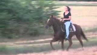 getlinkyoutube.com-SOLD!! single-footing 1/2 standardbred 1/2walking horse Ragedy Ann