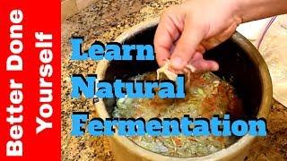 getlinkyoutube.com-Sauerkraut or How to Make Homemade Fermented Cabbage for Probiotics