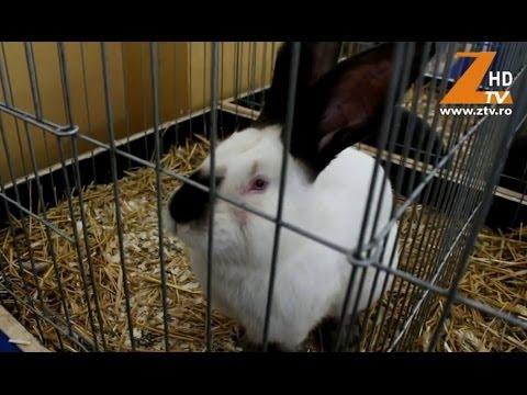 Expozitie de pasari si iepuri