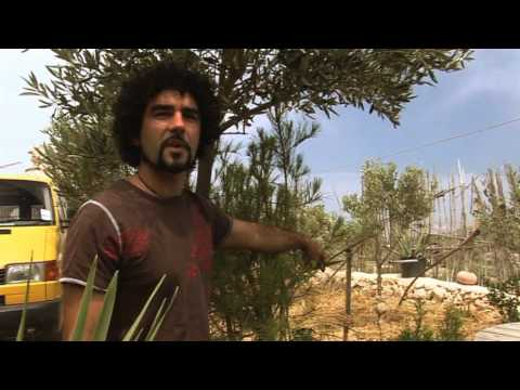 These Green Thumbs Documentary on Maltese agriculture & permaculture