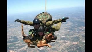 getlinkyoutube.com-สุนัขตำรวจ ฮีโร่ 4 ขา