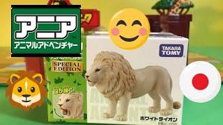 getlinkyoutube.com-アニア アニマルアドベンチャー ホワイトライオン (00327)