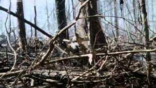Vietnam elveszett filmek 2.