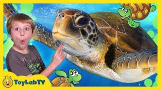 getlinkyoutube.com-TURTLES RESCUED FROM SHARK ATTACK! First Pet Baby Turtle IRL Family Fun Event Kids Video w/ Toys