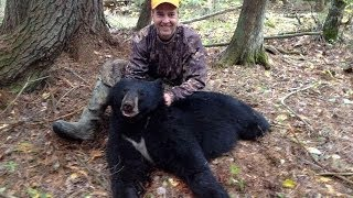 getlinkyoutube.com-Michigan Black Bear Hunt with Dogs!!!!