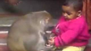 getlinkyoutube.com-monkey love with a baby in India