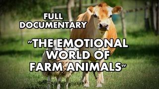 getlinkyoutube.com-The Emotional World of Farm Animals | Full documentary
