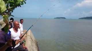 getlinkyoutube.com-ตกปลากระพงขาว 11 โลครึ่ง (มรกตสีเงิน)