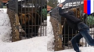 getlinkyoutube.com-Bear attack video: idiot puts his arm in cage and bear bites it off in shocking footage - TomoNews