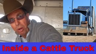 Inside a Cattle Truck