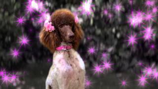 getlinkyoutube.com-Clip - Stan Falls in Love - Dog With A Blog - Disney Channel Official