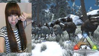 getlinkyoutube.com-[LIVE] ARK Survival Evolved : มาสร้างบ้านโซนหิมะ จับหมาป่า (เปิดกล้อง)