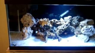 getlinkyoutube.com-Coralife 65 Skimmer