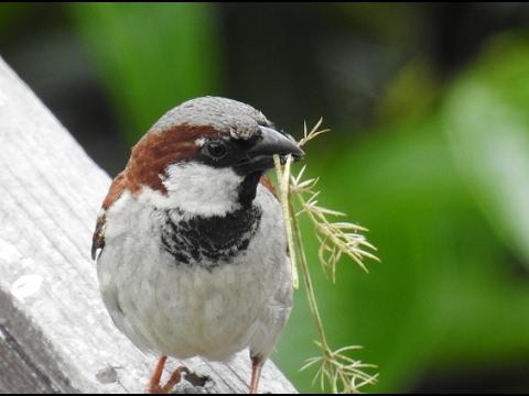 Nikon P900 - Bird Watching