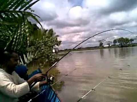 Trip air tawar : memancing udang galah di muara kembang