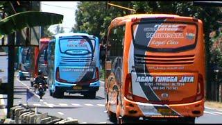 getlinkyoutube.com-Klakson telolet Agam Tungga Jaya (Sakly, Kimmoura, Saylendra, De Oranje, Komando, dan Rangers))