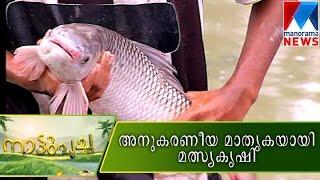 getlinkyoutube.com-Model fish farm  | Manorama News