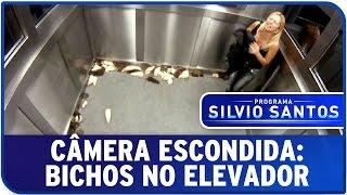 getlinkyoutube.com-Câmera Escondida: Bichos no Elevador