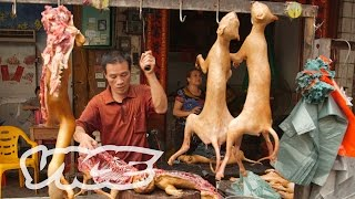 Dining On Dogs In Yulin: VICE Reports (Part 1/2)