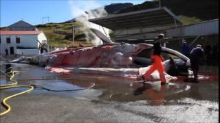 getlinkyoutube.com-طريقة تقطيع الحوت الى اجزاء صغيرة