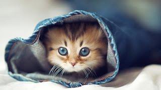 getlinkyoutube.com-Приколы про кошек и котят самые смешные: милые котята [#10]
