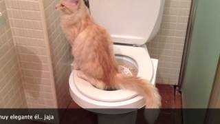 getlinkyoutube.com-Como enseñar a tu gato a ir al baño