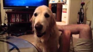 Funny Dogs, lustige Hunde zum Totlachen