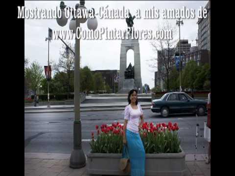 !! COMO PINTAR FLORES TE COMPARTE FESTIVAL DE TULIPANES (2).!!