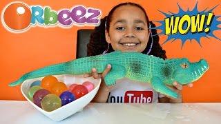 getlinkyoutube.com-GIANT MAGIC ORBEEZ! GIANT GROWING WATER CROCODILE! Kids Science Review