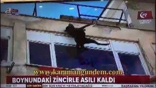 Karaman'da Köpeğin Ecel Terleri