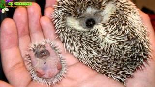 getlinkyoutube.com-¿Como son las crías recien nacida de los animales? PARTE 8
