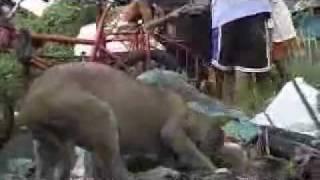 getlinkyoutube.com-Fwdder com   ดูแล้วเศร้าปนหดหู่ นี่แหละหนาชีวิตคนที่เลือกกเกิดไม่ได้   โพสโดย ป่าเขา