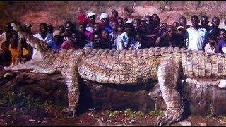 getlinkyoutube.com-MONSTER CROCODILE!! ( Killer croc hunted in Africa)