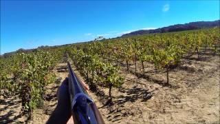 getlinkyoutube.com-Chasse dans le midi: perdrix rouge, faisans et lièvres au chien d'arrêt dans les vignes...