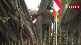 Kaluthara Boo Tree