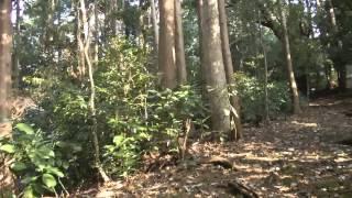 getlinkyoutube.com-愛知県豊橋市 首狩り神社
