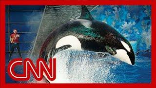 getlinkyoutube.com-SeaWorld releases video of 2006 killer whale attack