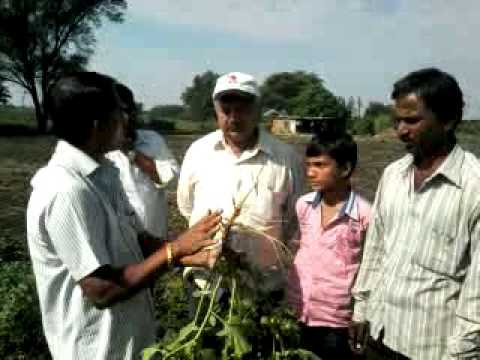 Video0010 Ashwgandha cultivation