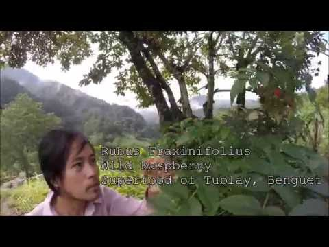 1Project Freedom, Permaculture Demonstration Site in Tublay, Benguet, Philippines