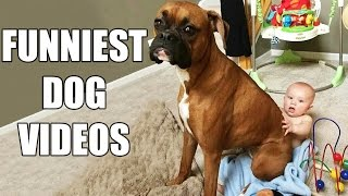 *Try Not To Laugh Challenge* Funny Dogs Compilation [MUST SEE] Funny Dog Videos & Vines 2016